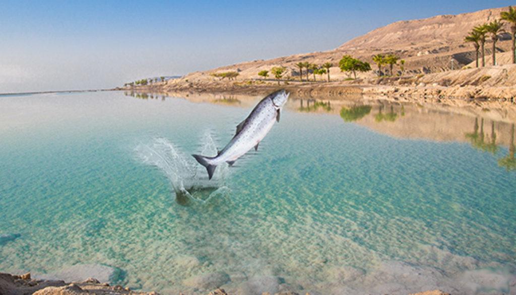 Dead-Sea Mar Muerto lleno de peces y vida silvestre en las orillas