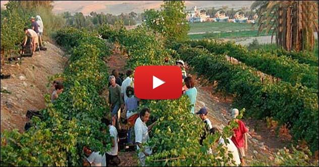 Se cumple profecia de Isaias - Desierto de Israel comienza a flrecer (video)