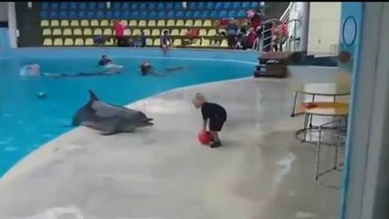 El juego de este delfín con un niño se hace viral