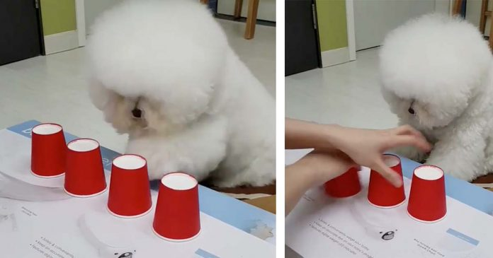 El perro más listo de Internet deja a muchos asombrados, animalito