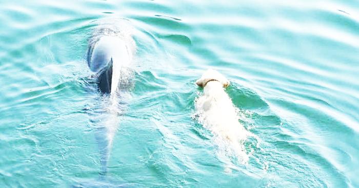Este perro va todos los días al océano para reunirse con su amigo delfin