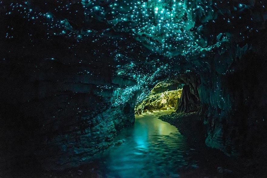 Glowworms Cave Nueva Zelanda