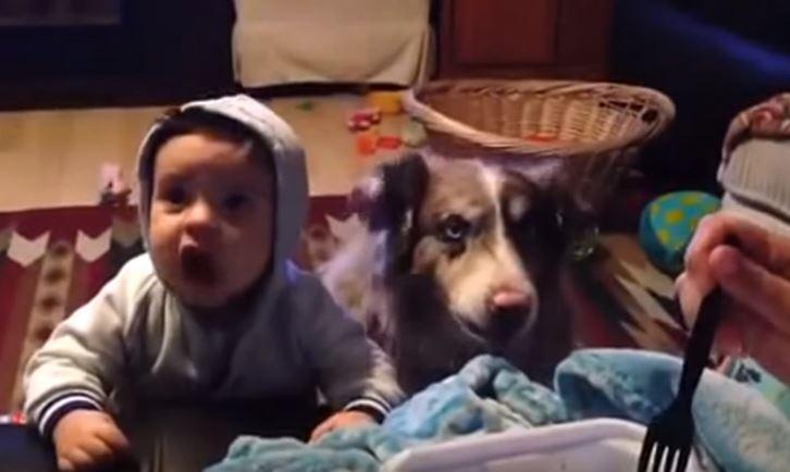 Intenta hacer que su bebé diga Mamá pero el perro se adelanta