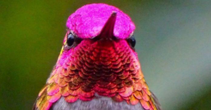 Mira cuánta hermosura hay en el plumaje del colibrí cuando la luz del sol le da