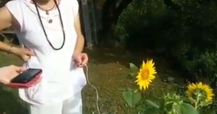 Mujer graba el sonido que emite un girasol y el resultado eriza la piel