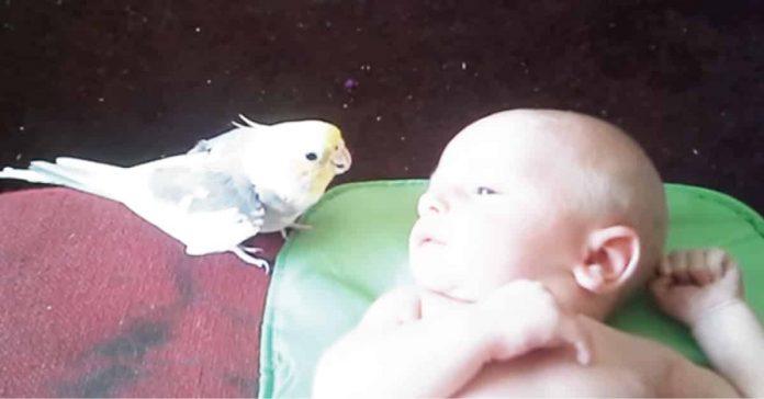 Tierno pajarito le canta una canción de cuna a un recién nacido y el final es lo más adorable