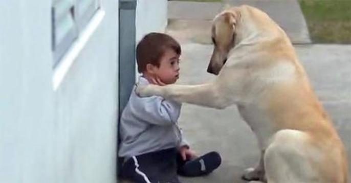 Un perro cuida de un niño