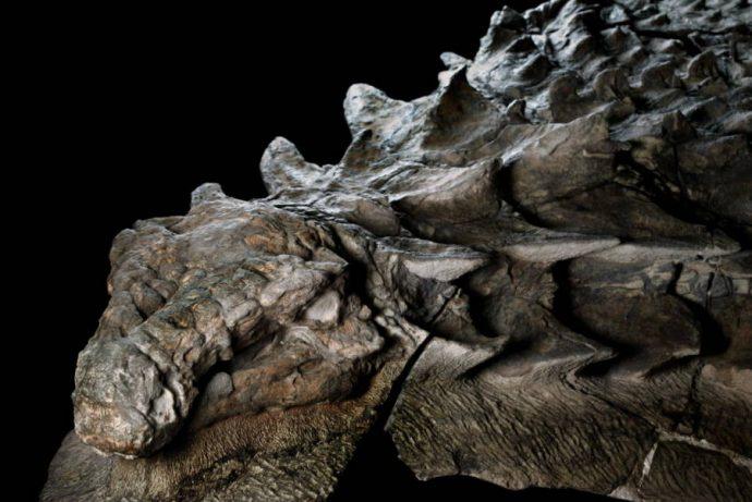 dinosaurio encontrado