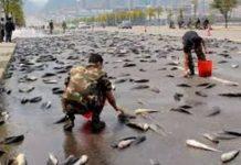 Llovieron peces dicen que es una de las profecías Bíblicas (video)