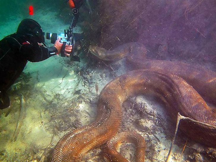 Dos buzos se encontraron cara a cara con una anaconda