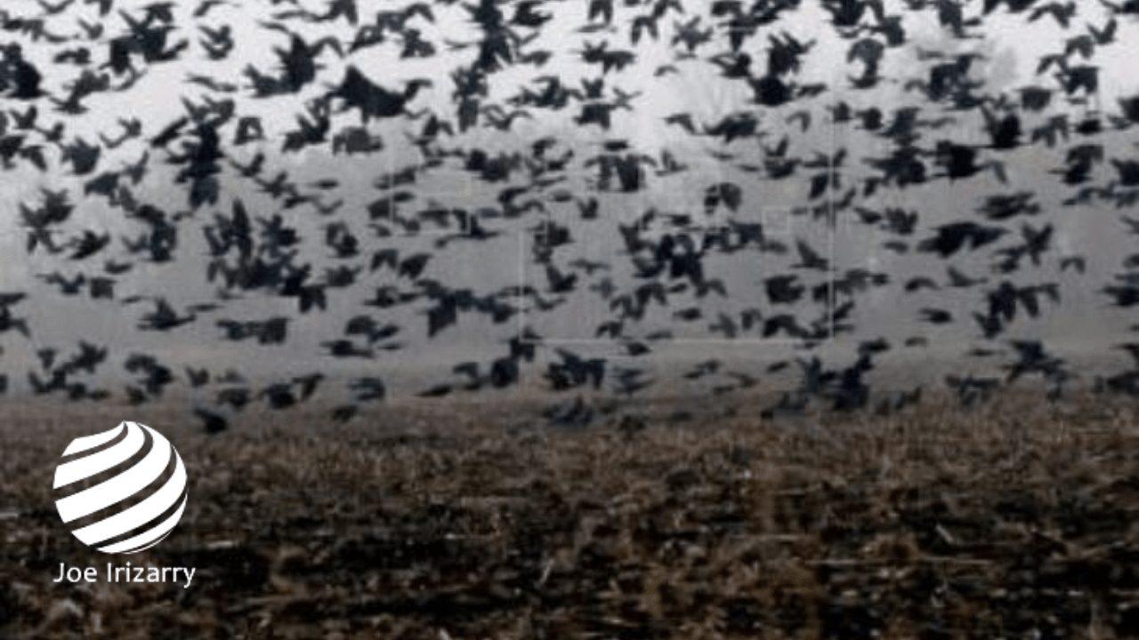 Plagas de Cuervos y moscos gigantes llegan a la zona cero del Virus en China
